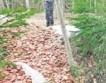 В эстонском лесу кто-то выбросил тонну колбасы