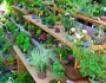 Комнатные растения — для здоровья и уюта