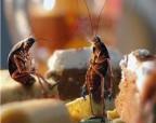 Самые смешные анекдоты про тараканов