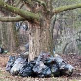В Ужгороде высадят алею сакур