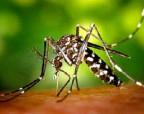 Правительство Италии будет штрафовать людей, которые не борются с комарами