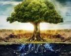 Ученые сделают аккумуляторы из дерева