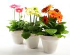 Десять растений, которые наполнят дом кислородом