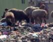 Афганистан собирается запретить импорт полиэтиленовых пакетов