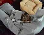 Забавная толстовка с карманом для котика