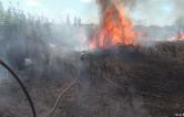 Экологи предрекают масштабные пожары по всей России