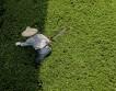 Уборка живой изгороди
