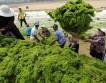 Уборка водорослей
