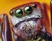 25 невероятных фактов из жизни насекомых