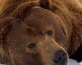 Голодный медведь украл мусорный контейнер