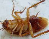Маленький таракан сотворил серьезное ДТП