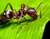 10 невероятных фактов о муравьях