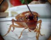 Тараканы-роботы помогут очистить город от мусора