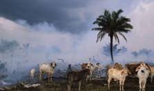 Глобальное потепление в Бразилии