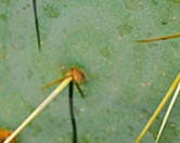 Материал поглощающий нефть, действуюет как иглы кактуса