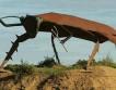 Жители Австралии спасли огромного таракана от помойки
