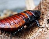Интересные факты о тараканах