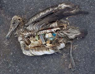 Пластик убивает Тихий океан