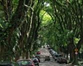 В маленьком городке Латинской Америки расположилась самая зеленая в мире улица