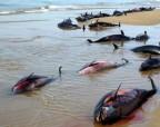 В Крыму массово гибнут дельфины