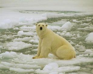 Глобальное потепление или…