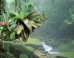 Атлантический лес вымирает из-за лесорубов