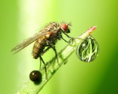 Художник нарисовал картины с помощью мух