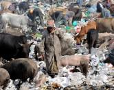 Как животные научились использовать наш мусор
