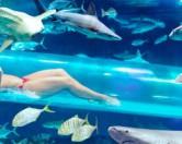 Опасный Лас Вегас: водные горки в аквариуме с акулами