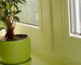 Растения в доме – чистый воздух и психологическая разгрузка