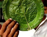 «Зелёная» посуда