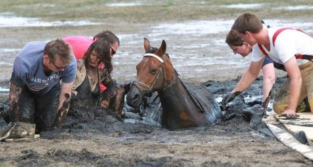 Австралийка спасла жизнь своей лошади