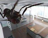 Почему мухи могут ходить вверх ногами по потолку?