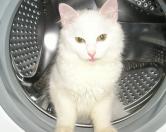 В Финляндии кошка выжила после 40-минутной стирки в машинке