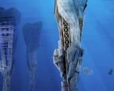 Подводные небоскрёбы переработают «мусорное пятно» в океане