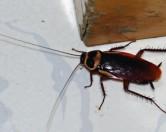 В китайской провинции Цзянсу на свободу вырвались более 1 миллиона тараканов