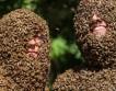 Очередной конкурс пчелиных бород пошел в Канаде