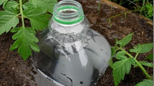 Пластиковая бутылка - оросительная система на грядке