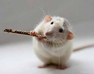 Гоним прочь мышей и крыс!