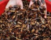 В Китае набирают популярность тараканьи фермы