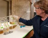 Водоросли как средство борьбы с загрязнениями и источник биотоплива