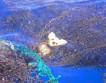 Ученые обнаружили скрытый в реке Темза мусор, представляющий собой угрозу для природы