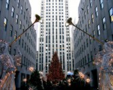 Рождественская елка в Центре Рокфеллера будет использована для строительства домов