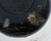 У Фінляндії жінка випрала кота разом із білизною