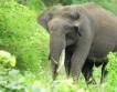 В Британии слоны решат проблему уборки придорожных лесов