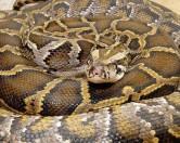 Змея Василиса два месяца не давала нормально сходить в туалет