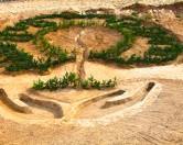 Помоги лесу — посади дерево!