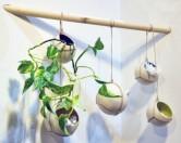 Зеленые решения для домашней обстановки