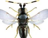 От похмелья страдают даже насекомые