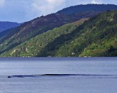 Загадочное существо из озера Лох-Несс вновь стало поводом для обсуждения